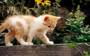 Picture cat, white, cat, flowers, kitty, red, cat