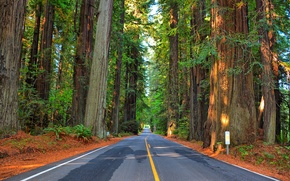 Picture road, forest, trees, highway