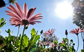 Wallpaper flowers, from the bottom up, nature, pink, petals, the sun, the sky, spring
