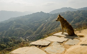 Picture dog, panorama, each, dog, nature