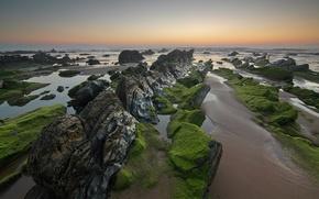 Picture sea, the sky, algae, sunset, stones, rocks, horizon, tide