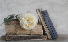 Picture rose, books, old, white
