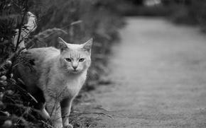 Picture Cat, Cat, Cat, Animal, Grayscale
