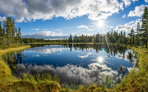 Picture trees, lake, reflection, Norway, Sunny day, Norway, Kjos, Telemark County
