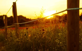 Picture the sun, macro, flowers, background, widescreen, Wallpaper, the fence, rope, the fence, wallpaper, flowers, widescreen, …