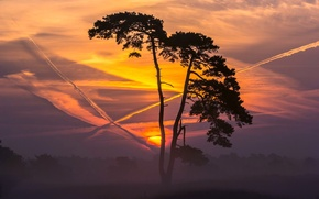 Picture trees, landscape, sunset, nature