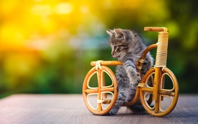 Picture bike, kitty, toy, cat.cat
