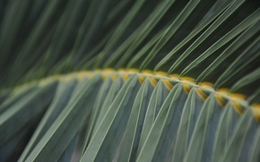 Picture greens, stem, fern