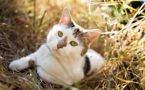 Picture cat, look, nature