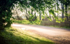 Picture road, summer, the sun, light, trees, nature