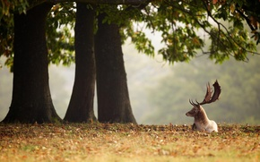 Picture autumn, leaves, trees, Deer, animals