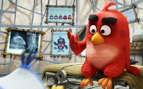 Picture cinema, sake, Red, game, feathers, island, birds, cartoon, movie, film, bones, doctor, angry, Angry Birds, …