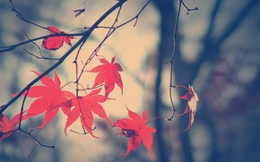 Picture autumn, leaves, branch, Fall