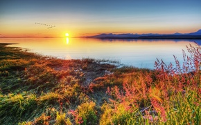 Picture grass, sunset, birds, lake, shore
