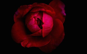 Picture macro, background, paint, petals, Bud