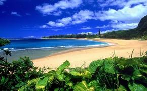 Picture beach, vegetation, beach, Haena