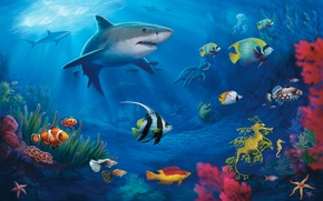 Picture fish, turtle, corals, sharks, underwater world, Moray