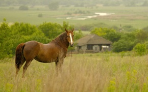 Picture field, house, rain, horse, morning