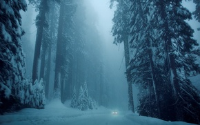 Picture cold, winter, road, car, machine, snow, trees, nature, background, tree, Wallpaper, tree, wallpaper, white, car, …