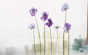 Wallpaper flowers, flowers in a vase, floral arrangement
