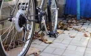 Picture leaves, bike, tile, the sidewalk