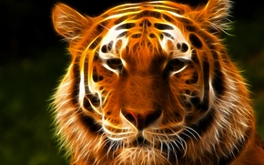 Picture look, face, tiger, 3D graphics