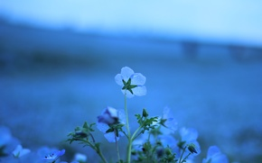 Picture drops, macro, flowers, nature, glade, color, plants, blue, len
