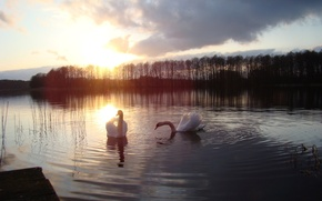 Picture sunset, lake, swans