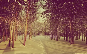 Picture the sun, snow, nature, mood, street, new year, ate, pine, weather, Sunny, tree, 2014, Noyabrsk, ...