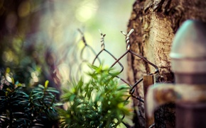 Picture leaves, macro, nature, tree, mesh, the fence, fence, blur, bokeh