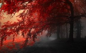 Picture autumn, trees, red, grey