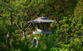 Picture garden, larch, stone lantern, Chinese garden