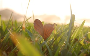 Picture greens, grass, the sun, macro, background, widescreen, Wallpaper, meadow, leaf, wallpaper, leaf, widescreen, background, macro, …