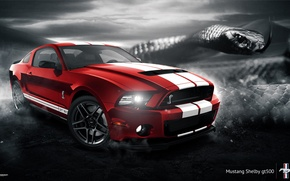 Picture Mustang, Ford, Shelby, GT500, Muscle, Red, Car, Snake, 2014
