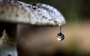 Picture macro, nature, mushroom, drop