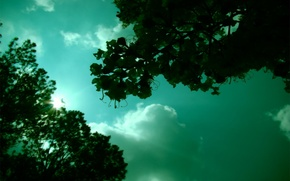 Wallpaper greens, the sky, the sun, mood