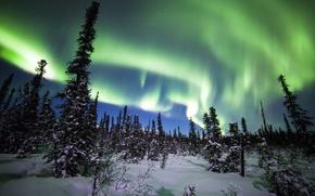 Picture winter, forest, snow, trees, Northern lights, ate, Alaska, Alaska, Denali National Park, Denali national Park