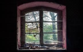 Picture room, web, window