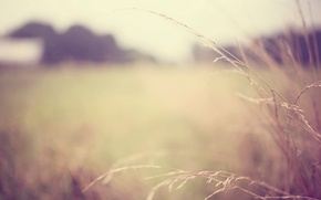 Picture macro, widescreen, Wallpaper, plant, blur, wallpaper, widescreen, background, macro, blur, full screen, HD wallpapers, plant, …