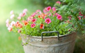 Picture greens, flowers, tenderness, bucket
