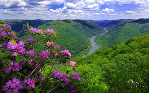 Picture flowers, mountains, nature, river