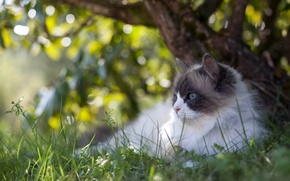 Picture greens, grass, cat, glare, tree, lies, resting, Tomcat, nature, bokeh