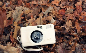 Picture autumn, white, leaves, camera, the camera