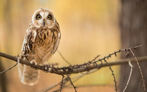 Picture owl, bird, branch, sitting