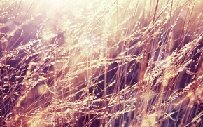 Wallpaper Rosa, morning, grass, light, drops