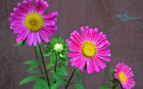 Picture leaves, petals, stem, yard, flowerbed