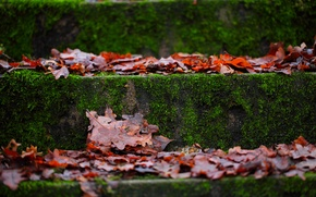 Picture autumn, macro, foliage, moss, stage