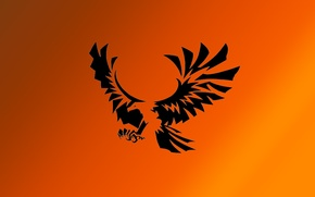Picture bird, Wallpaper, eagle, gardient