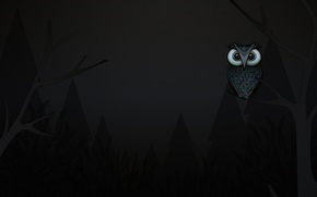 Picture trees, owl, branch