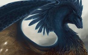Picture dragon, feathers, fantasy, art, Eragon